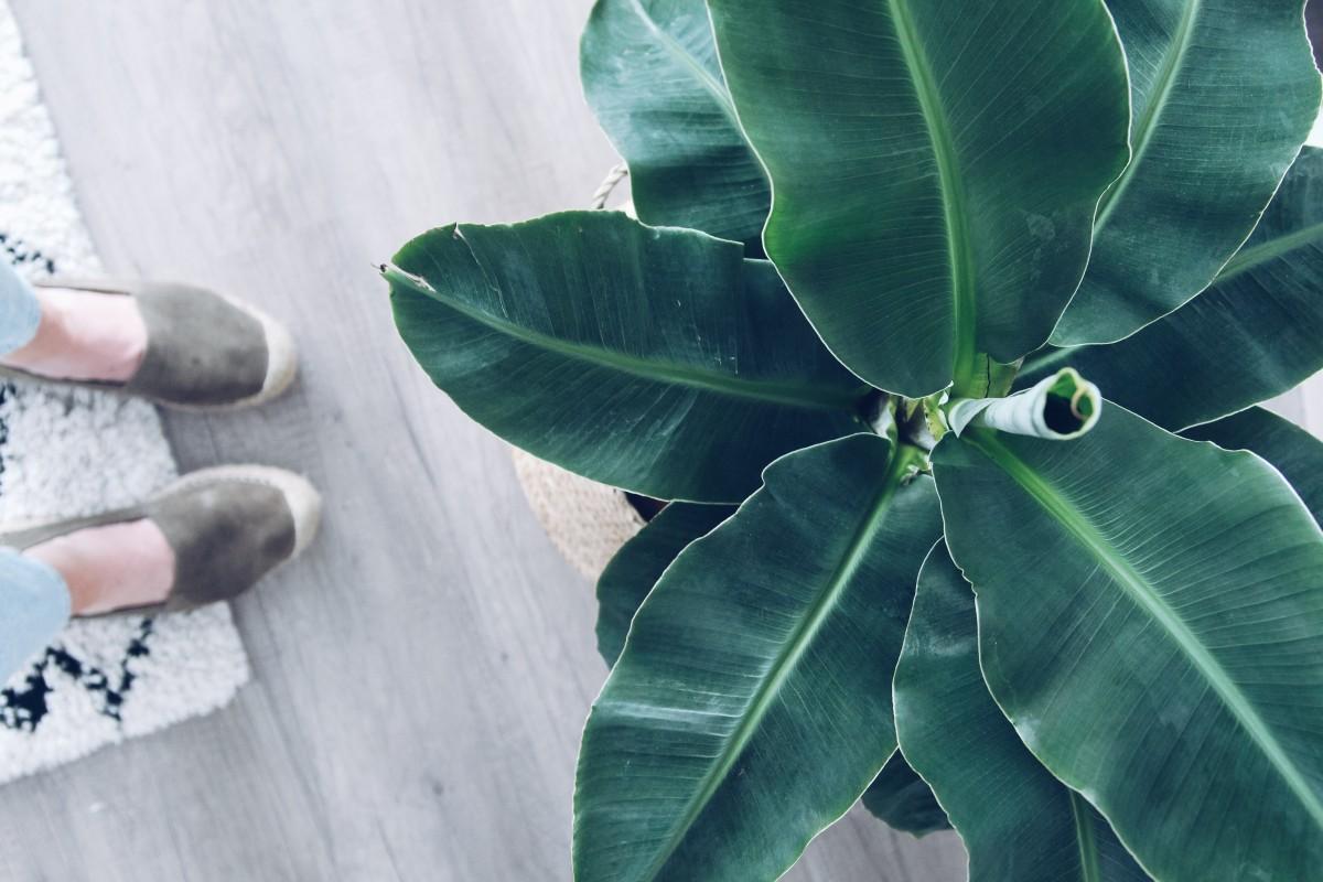 Mijn favoriete planten in huis