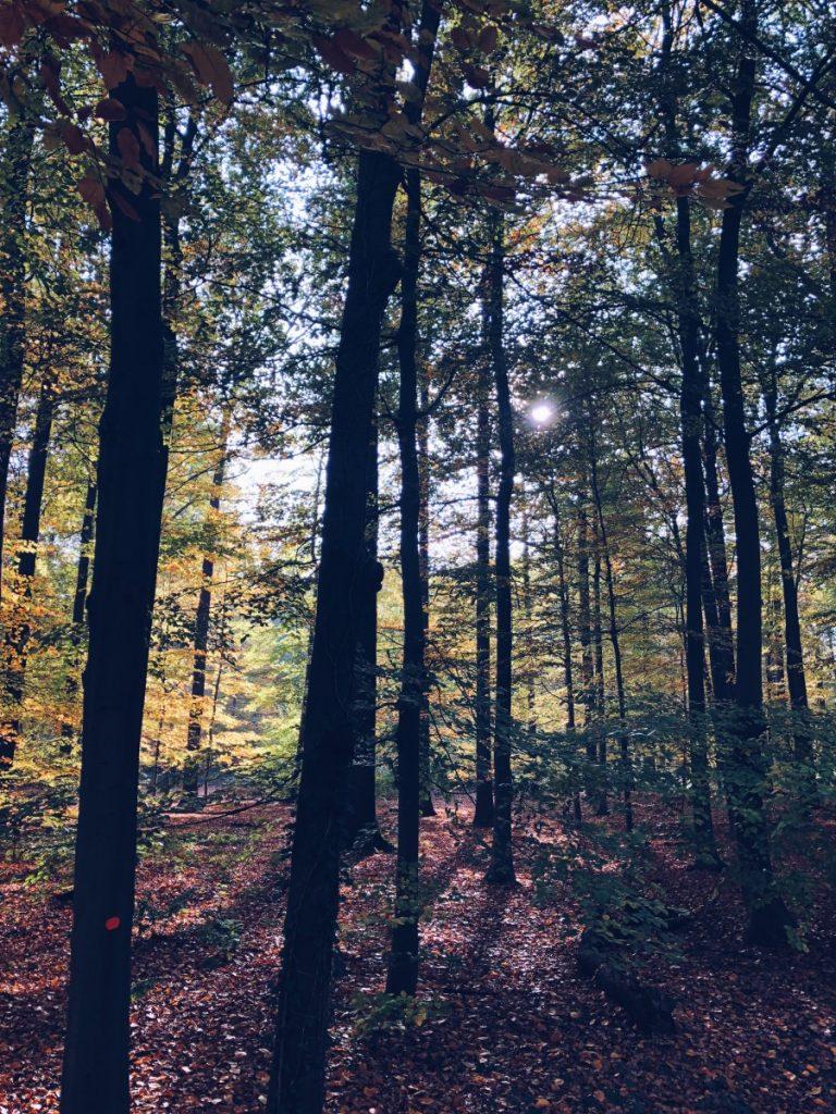 5x waarom de herfst zo fijn is